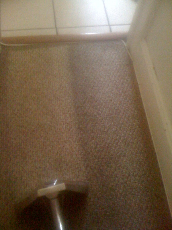 steam carpet cleaning in md