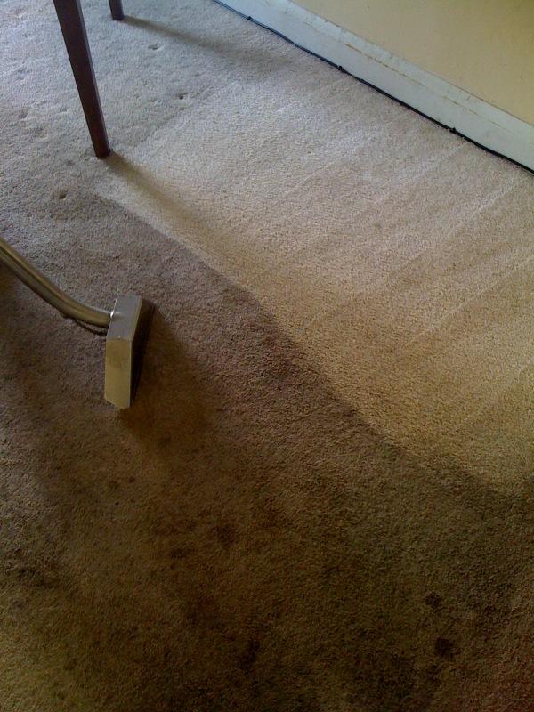 Maryland Carpet Cleaners Floor Matttroy